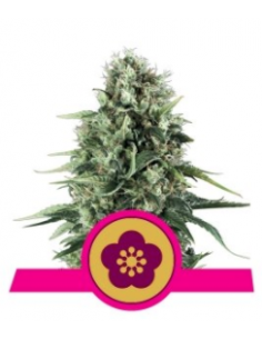 Fem Power FLower AK (3)