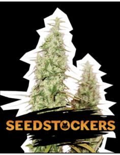 Seedstockers Auto Santa...