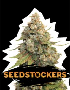 Seedstockers Fem Golden...